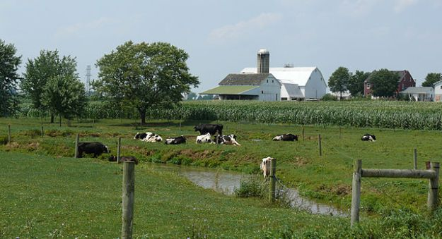 Dairy farm Improvement